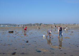 Pêcheurs à pieds sur la plage de Kerleven