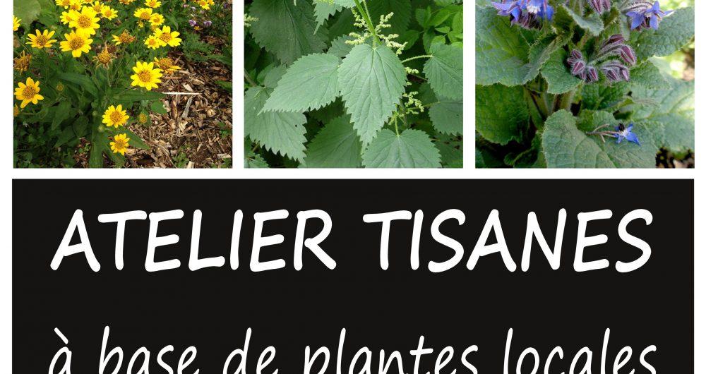 Affiche-Plantes-Micheline-Malabous