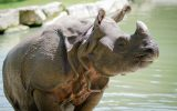 Loi-LeGuerno-Branfere-Rhino