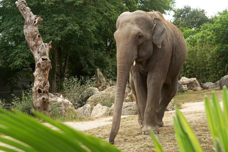Loi-Pont-Scorff-Zoo-Anthony-Tual-1814