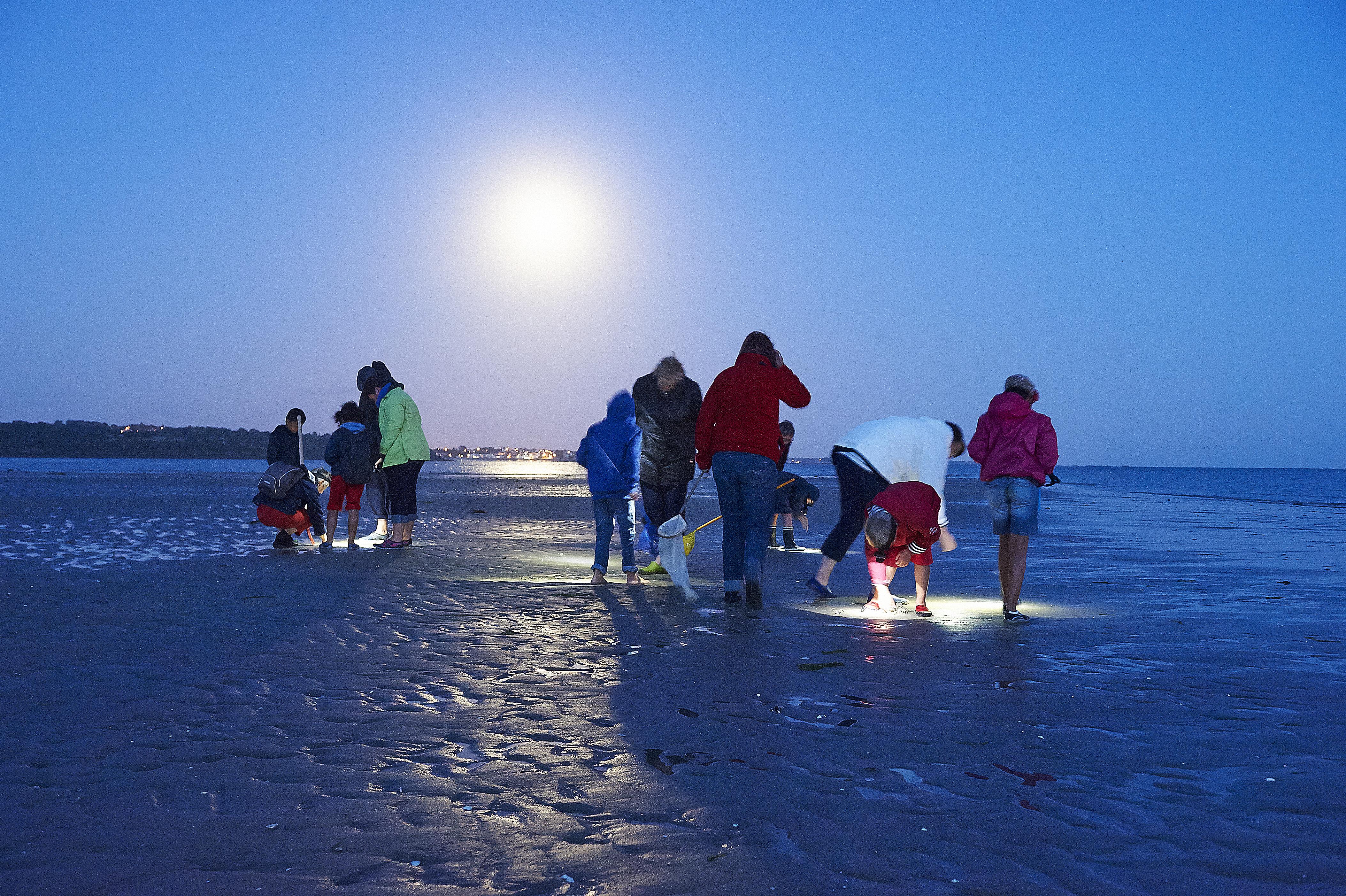 Sortie nature grande marée à la nouvelle lune