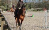 ecuries-locamaria-equittaion-cheval-poney-saint-yvi–4-