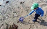 sortie-nature-peche-a-pied grande marée